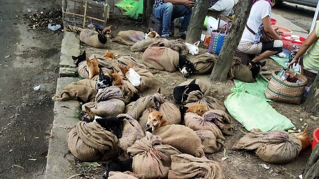 Dog meat ban in Nagaland: Boon or bane?