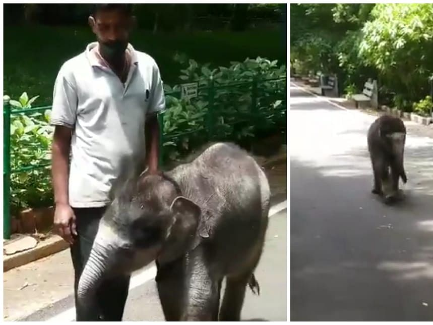 WATCH: How baby elephant 'Vedavathi' is breaking the Internet