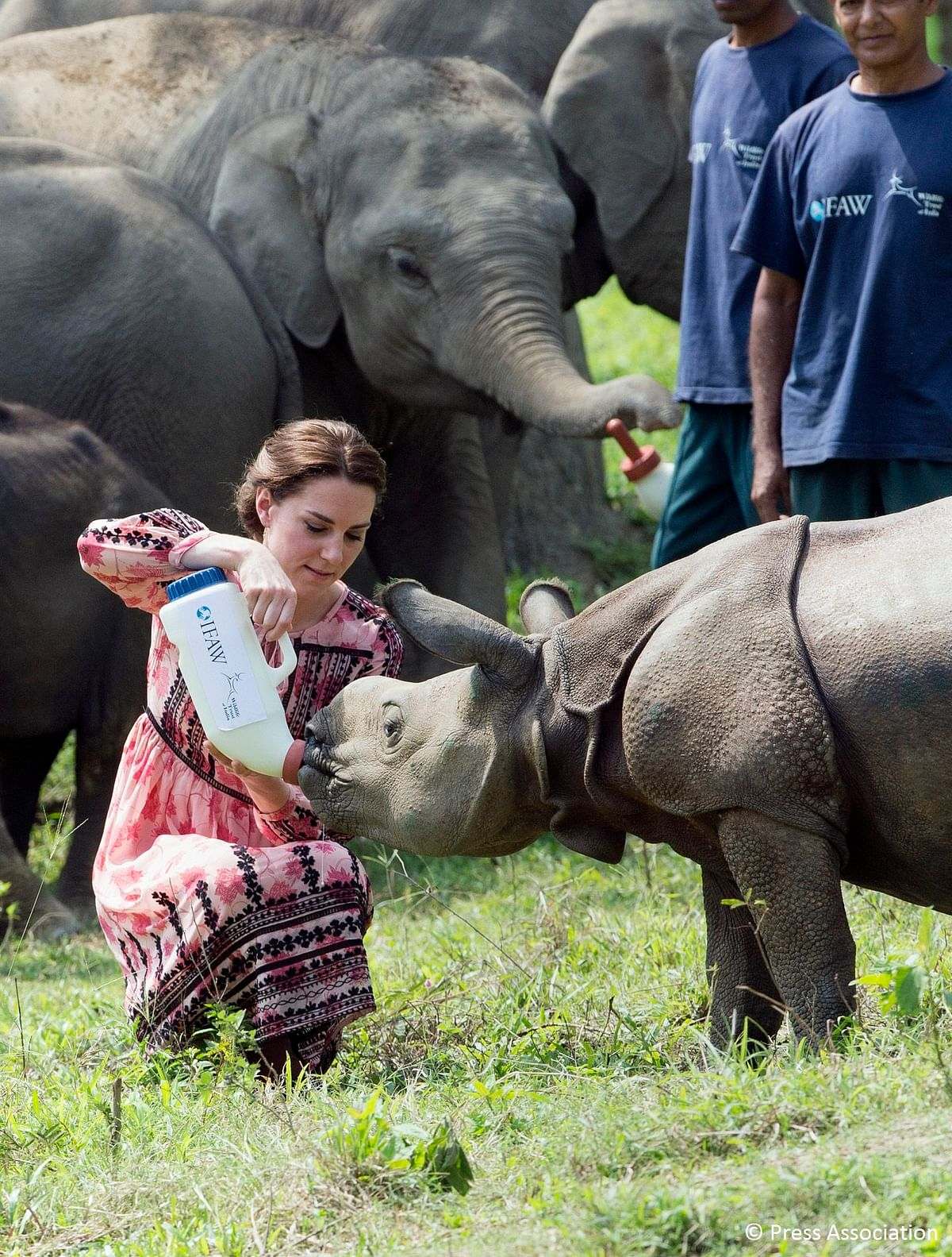 Prince William and Kate Middleton, the Duke and Duchess of Cambridge, visited the Kaziranga National Park in Assam on April 13, 2016