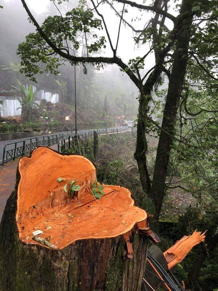 Smart City Development Limited was directed to furnish all documents in their possession about the development of Gangtok as a Smart City which involves the plan of action for the felling of trees and environmental impact assessment, if any