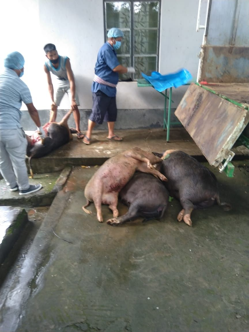 Adviser AH&V appealed all to be vigil and refrain from buying pigs from unknown source during  ban on import of pigs from outside the state.