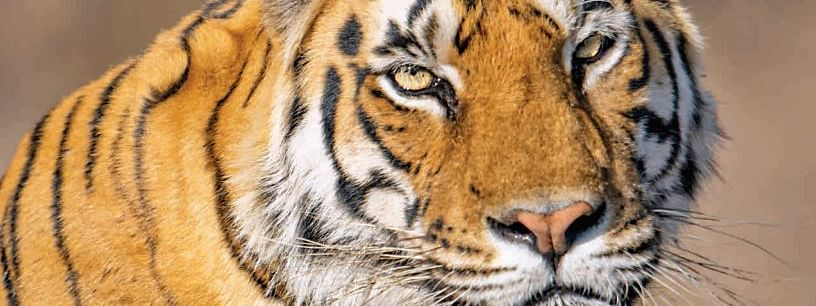 Centre releases country's tiger census report