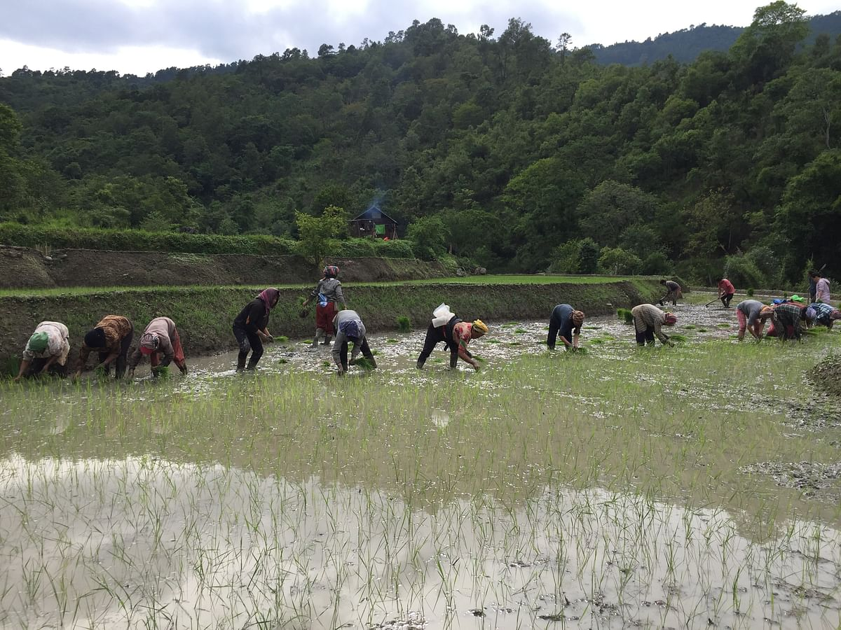 People in hill districts of Manipur still practise traditional way of farming