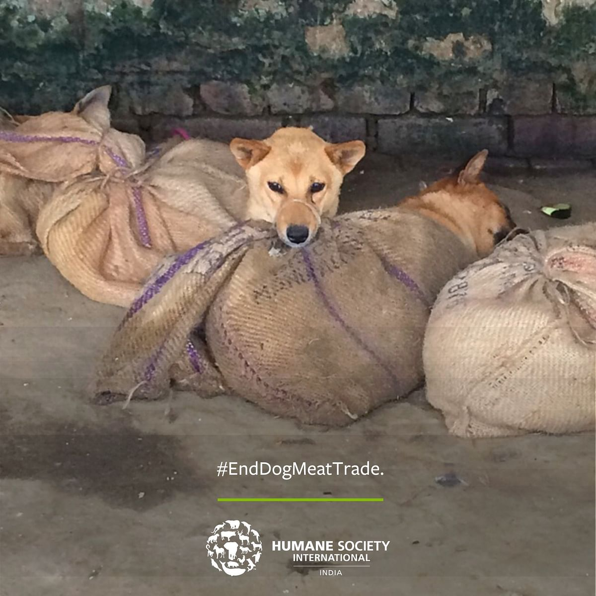 Animal activists in the recent past from 2016 have been campaigning against Nagaland for its dog meat consumption