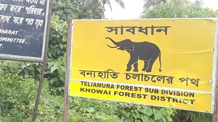 World Elephant Day: How the jumbo population declined in Tripura