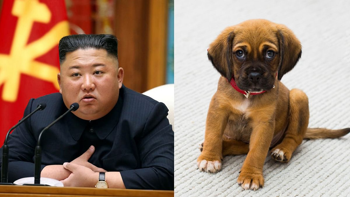 Kim Jong Un Passes Order North Koreans Forced To Give Away Pet Dogs For Restaurant Meat