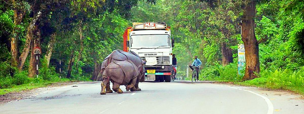 21 animals in Kaziranga National Park have died due to vehicle hits