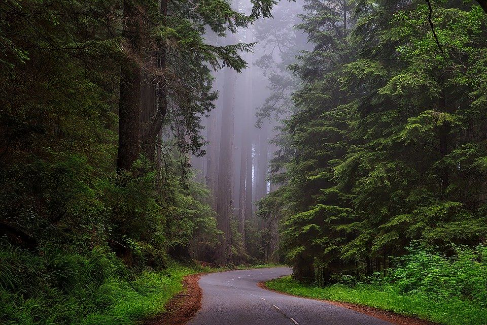 Forests have been a lifeline to mankind from the very beginning of civilization