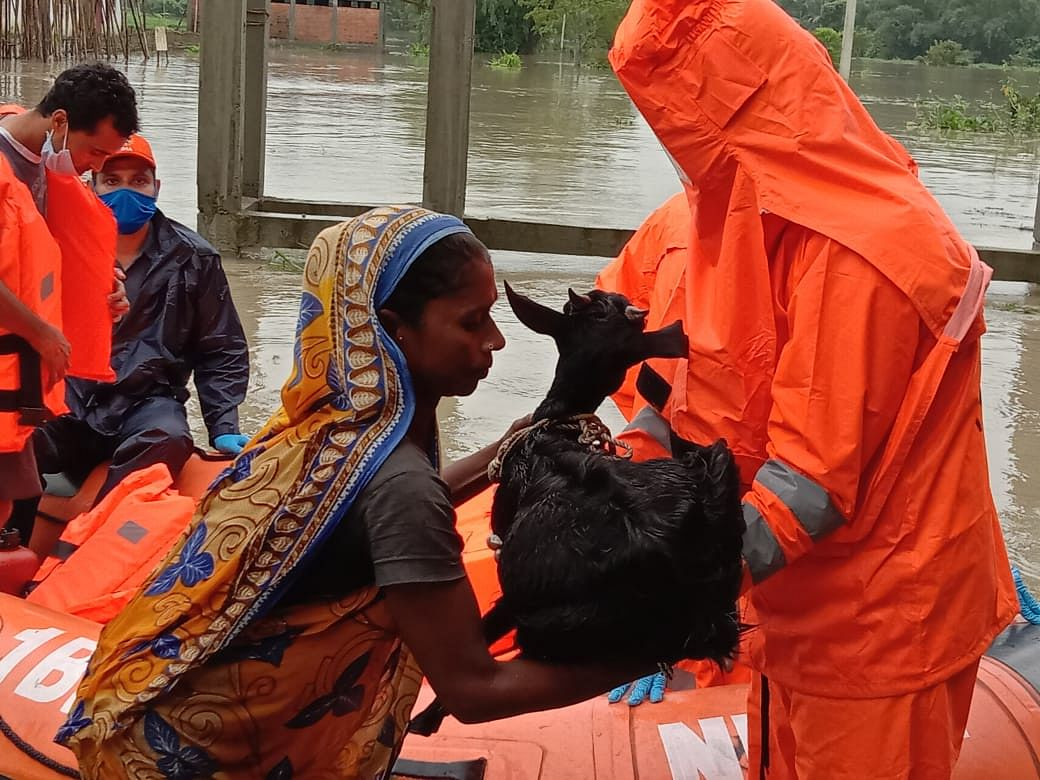 Donning on PPE's teams of NDRF and SDRF provide the much needed relief and evacuation protocols of flood affected people