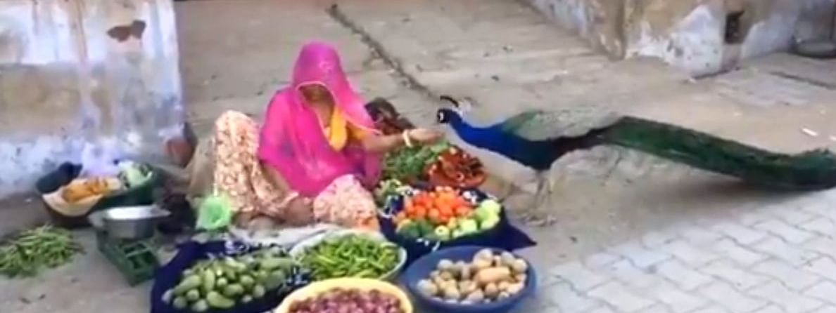 The video shows a lone vegetable vendor selling her goods on the street and feeding a majestic peacock as well