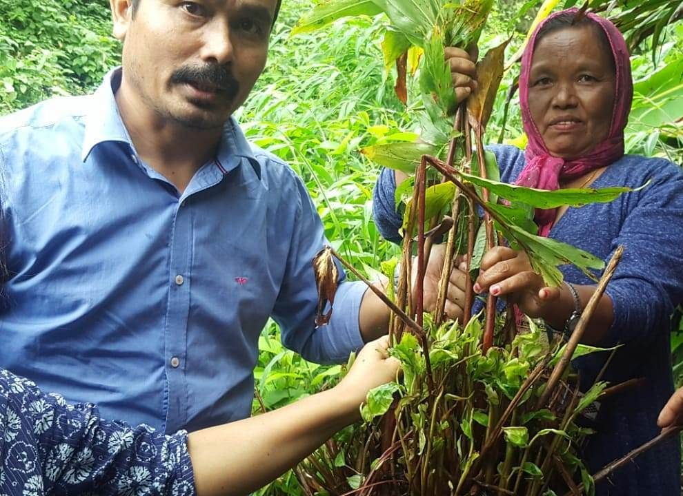 Spices Board officer demonstrating phytosanitation measures  for Chirkey disease management for  large cardamom farmers in Khonsa, Tirap district of Arunachal Pradesh