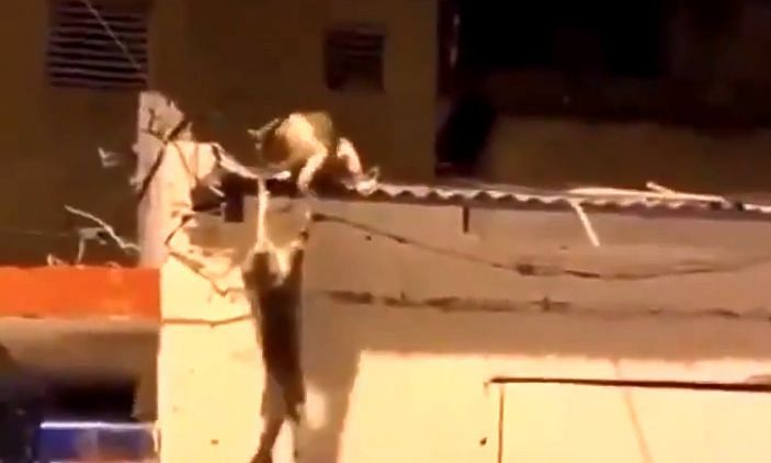 The video of the two cats engaged in battle has garnered 6 million views
