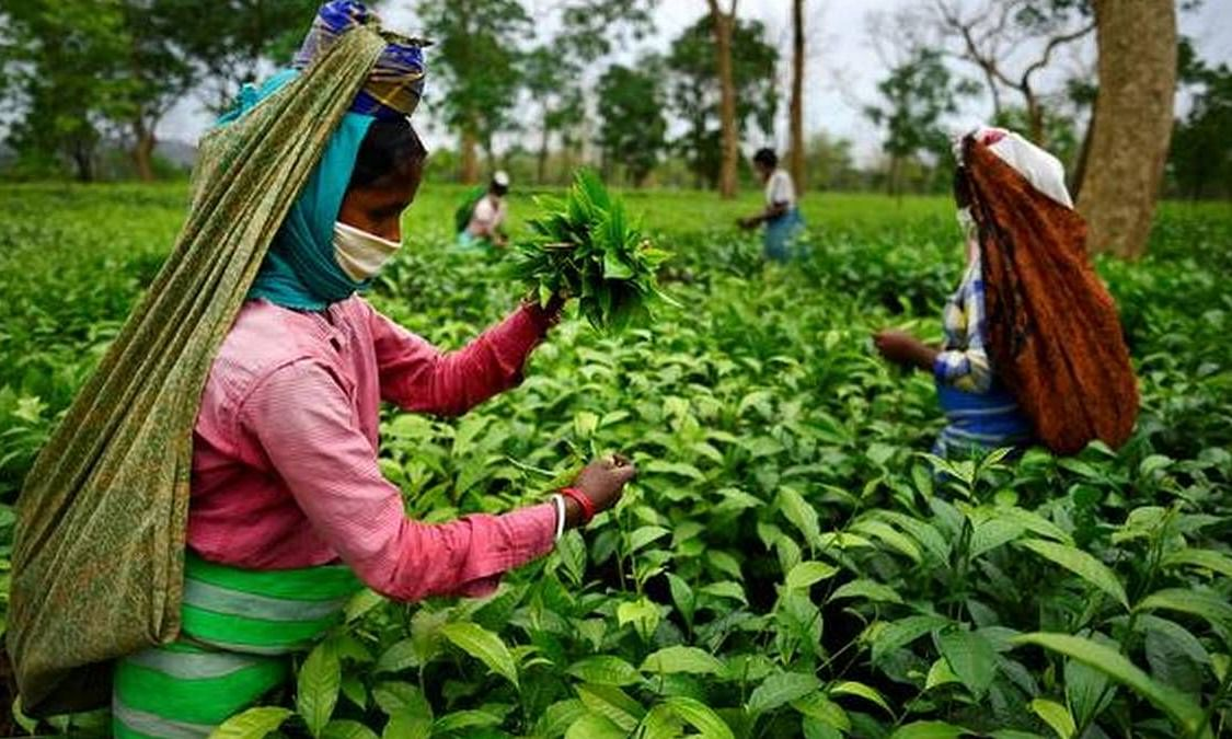 The state government has also announced an agriculture income tax holiday to tea gardens for three years