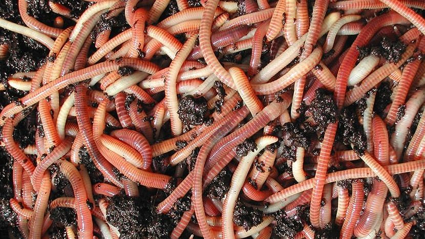 Earthworms swarming could be an early warning sign of Earthquake