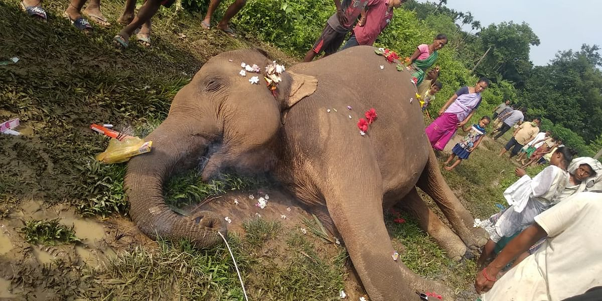 The elephant's body was found in a paddy field
