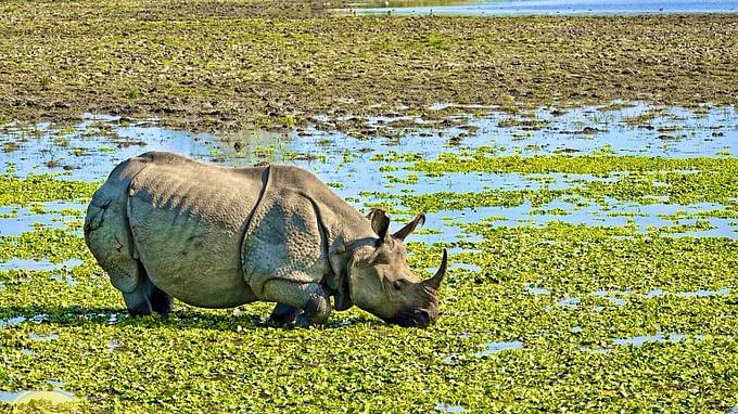 Kaziranga National Park to reopen for visitors from Oct 21