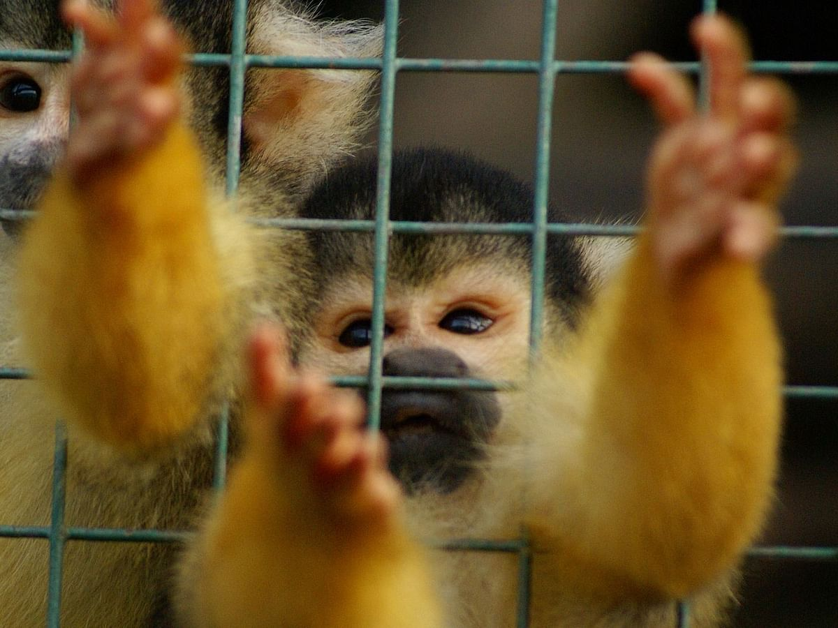 The not-so 'Cute' truth about wildlife viral videos