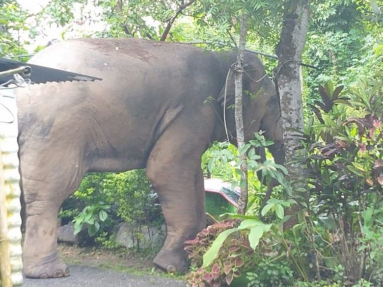 Man-Elephant conflict leaves residents worried inside Narangi Cantt