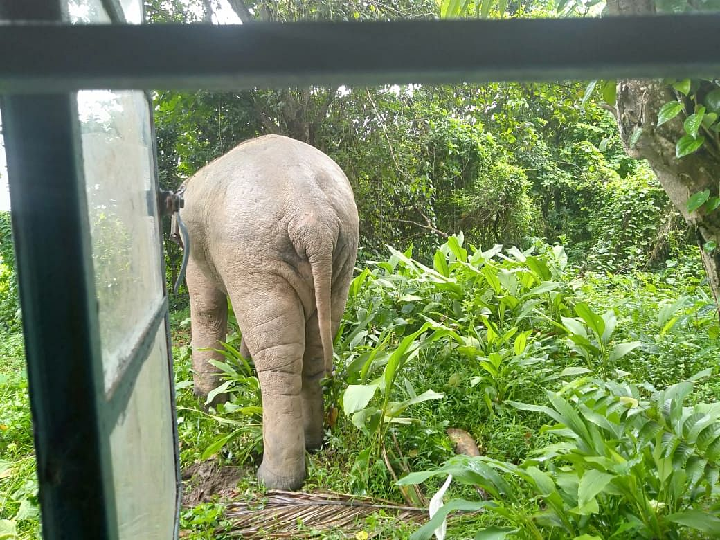 Residents have installed nails at doors and windows as deterrence against elephant onslaught