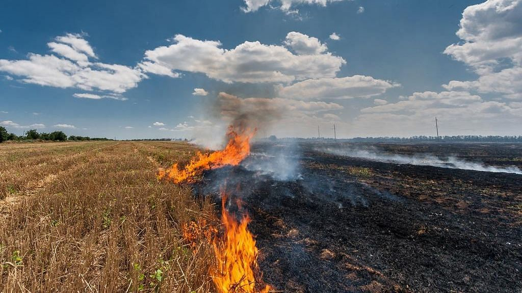 'Angry' over farm bills, Punjab records highest stubble burning cases in four years