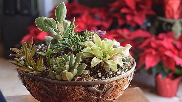 10 air purifying indoor plants to bring home this Diwali