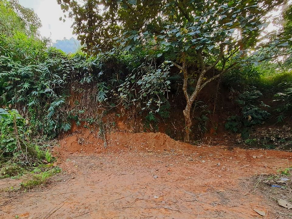 'Elephant in the room' is passe: Woman finds dead elephant buried on property