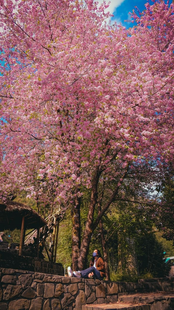 Sitting beneath the pink canopy was indeed a breathtaking experience