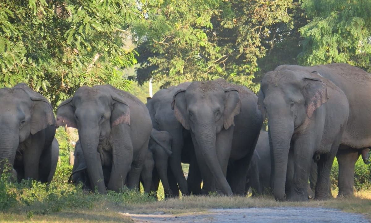 Locals said that the elephant was roaming in that area for quite a long time and that the elephant was also ill