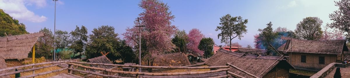 The cherry trees do not just boast a single shade of pink. Different trees showcase a kaleidoscope of the colour pink