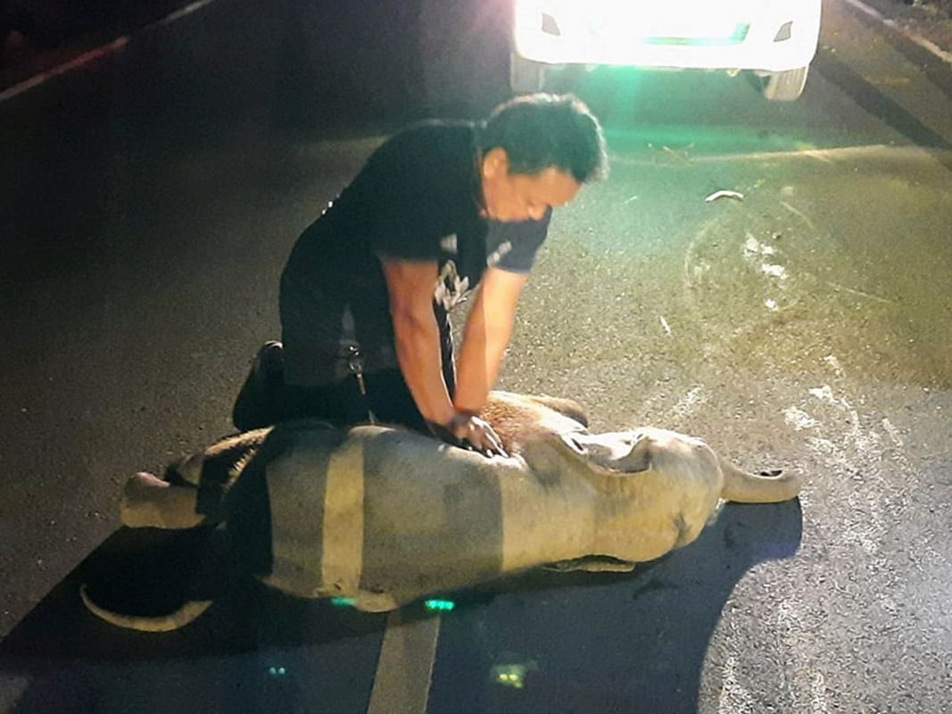 WATCH: Rescue worker performs CPR to save a baby elephant