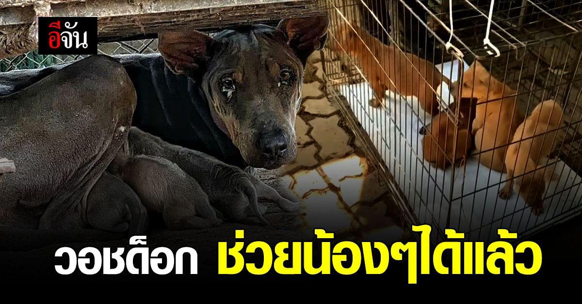 วอชด็อก ไม่รอ ปศุสัตว์ เชียงใหม่ ลุยช่วยน้องหมา 30 ชีวิต ได้สำเร็จ
