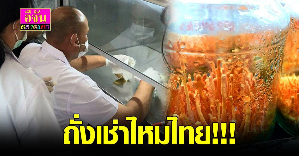 ไทยทำได้!!! พัฒนาและผลิต ถั่งเช่าไหมไทย สมุนไพรทองคำ เพื่อ คนรักสุขภาพ