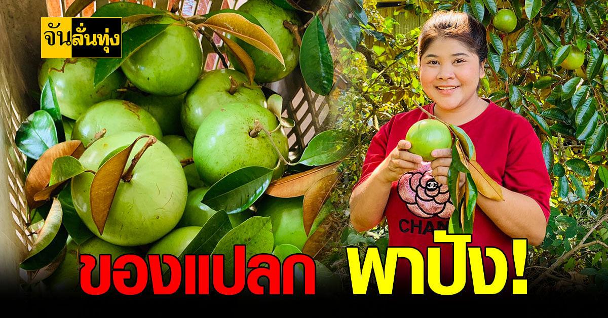 สาวใต้ ขาย แอปเปิ้ลน้ำ ใน Tiktok สร้างรายได้