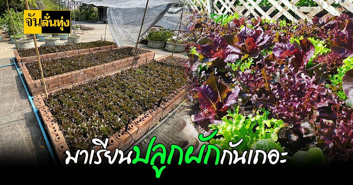 พิพิธภัณฑ์การเกษตรฯ ใจดี ชวนคนมาเรียน ปลูกผัก สร้างรายได้ในช่วง โควิด