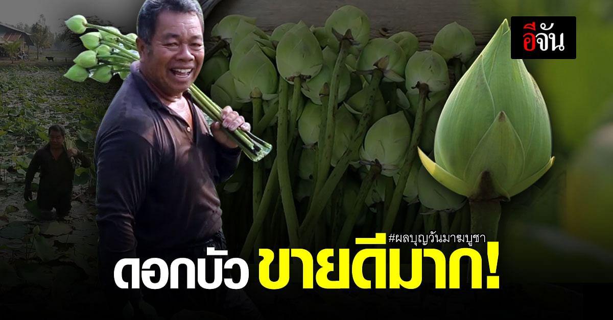 เกษตรกรนาบัวยิ้มออก ผลบุญวันมาฆบูชา ขายดอกบัวได้วันละ 2,000 บาท