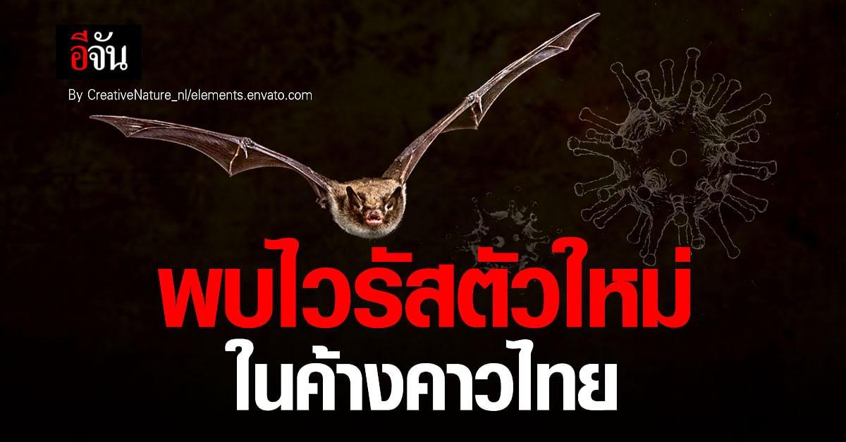 ผลวิจัย ชี้ พบไวรัสตัวใหม่ในค้างคาวในไทย คล้าย โควิด