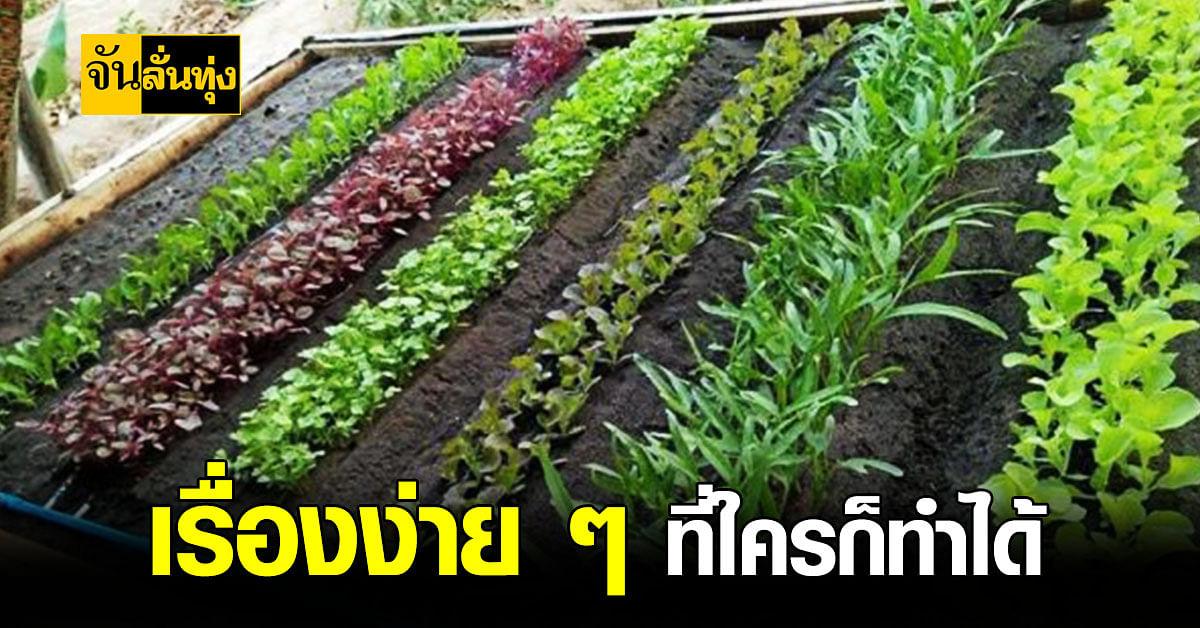 วิธีการ เพาะเมล็ด ผัก สวนครัว 8 ชนิด ที่ปลูกง่ายและโตเร็ว