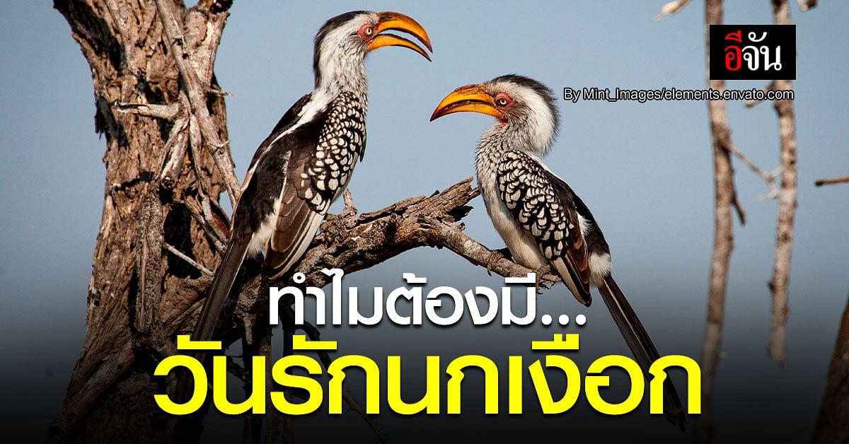 นกเงือก ตัวแทนแห่งรัก ที่ต้องรักษ์