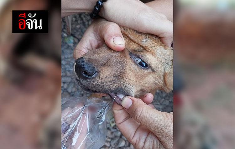 ตะขอเบ็ดติดในปากหมา