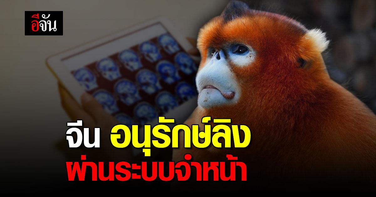 จีน พัฒนาระบบ จดจำใบหน้า เพื่ออนุรักษ์ ลิงจมูกเชิดสีทอง