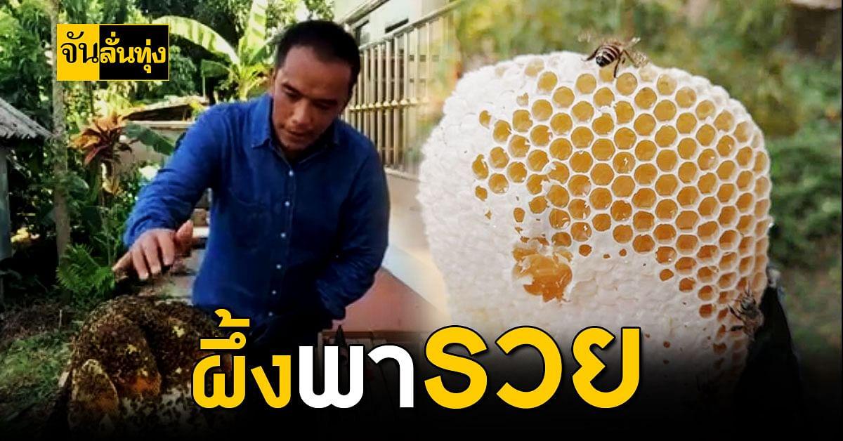 ครูหนุ่มเชียงราย เลี้ยงผึ้ง สร้างรายได้เสริม