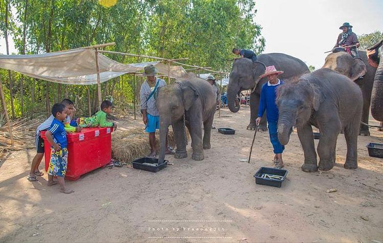 งานเเสดงช้าง วังทะลุ