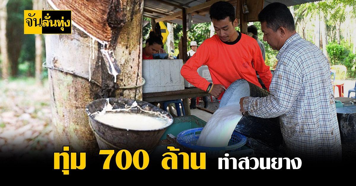 สนับสนุนการทำสวนยางแปลงใหญ่ การทุ่ม 700 ล้านบาทช่วย