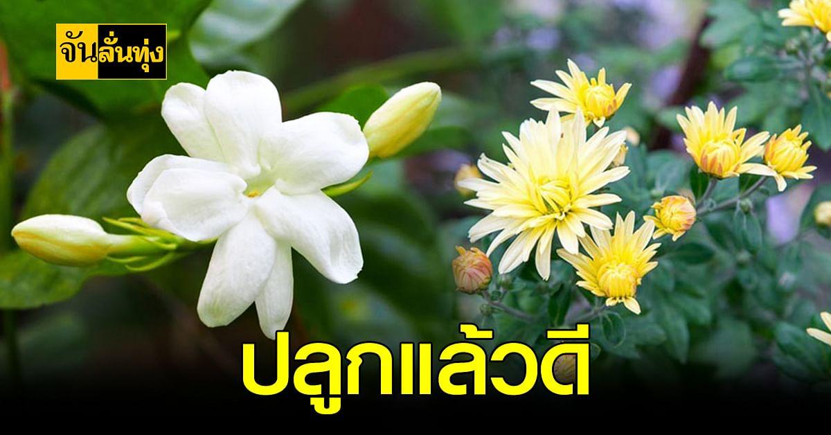 7 ดอกไม้มงคล ความหมายดี และ เป็นสิริมงคล