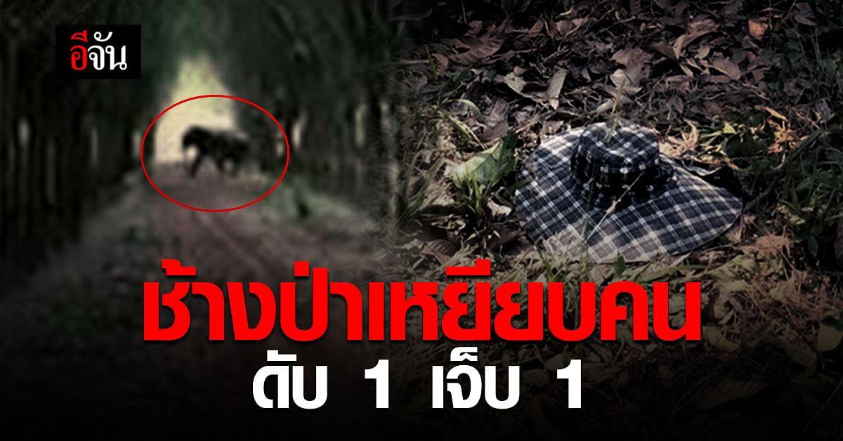 ระยอง ดับ 1 เจ็บ 1 เซ่น ช้างป่าเหยียบคน !