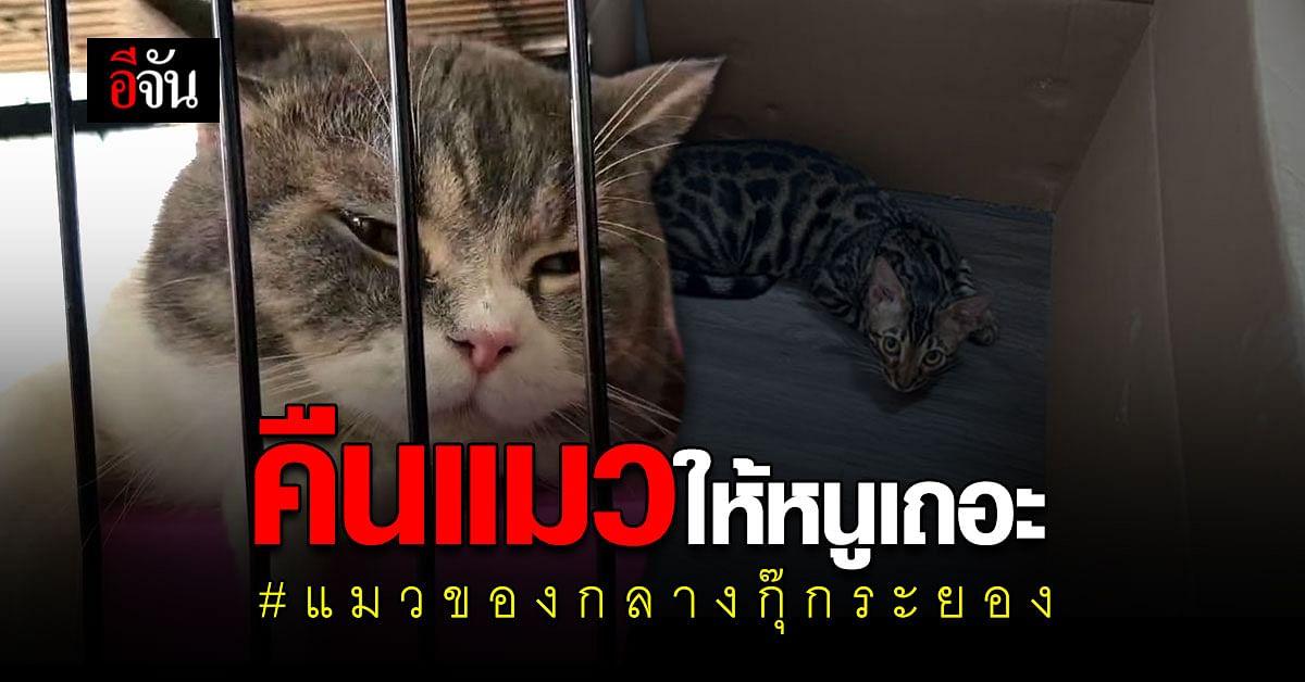 เจ้าของแมว โพสต์ ขอแมวของกลางคืน!