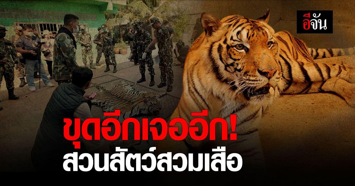 พญาเสือ สืบต่อ! มุกดาสวนเสือและฟาร์ม ลักลอบ สวมเสือ