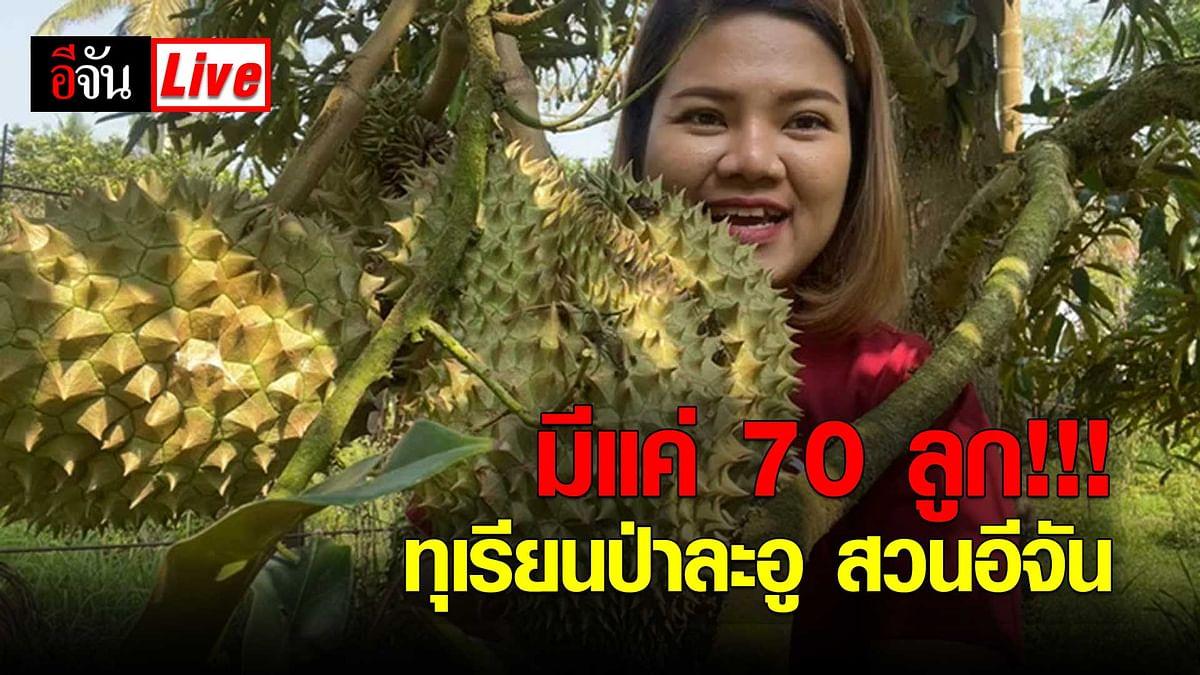 (Video) Live ! มีเเค่ 70 ลูก #ทุเรียนป่าละอู สวนอีจัน