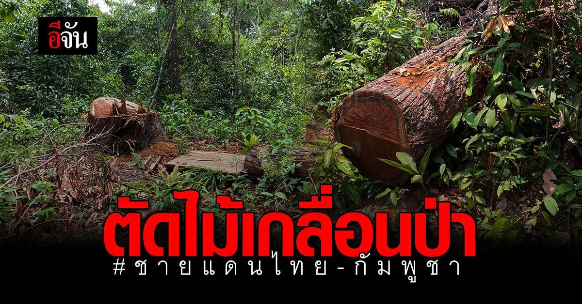 ตัดไม้ ไม่ว่างเว้น! ไม้ 83 ต้น ถูกคนใจร้ายลักลอบตัด กลางป่าชายแดนไทย-กัมพูชา
