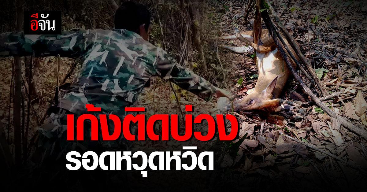 เก้งติดบ่วง ผู้พิทักษ์ป่าช่วยชีวิต รอดหวุดหวิด !
